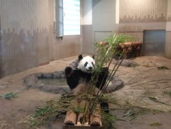 夏を満喫☆動物園へ行ってきました!